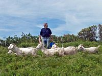 Todd_Eastin_as_goats_march_by