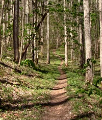 Roan Mountain State Park trail in the spring