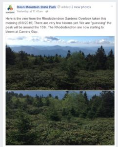 Rhododendron-Gardens-Wednesday-8-June-2016