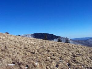 Old-Growth-Grasslands on Round Bald